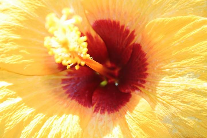 34-magnolie-orange-4